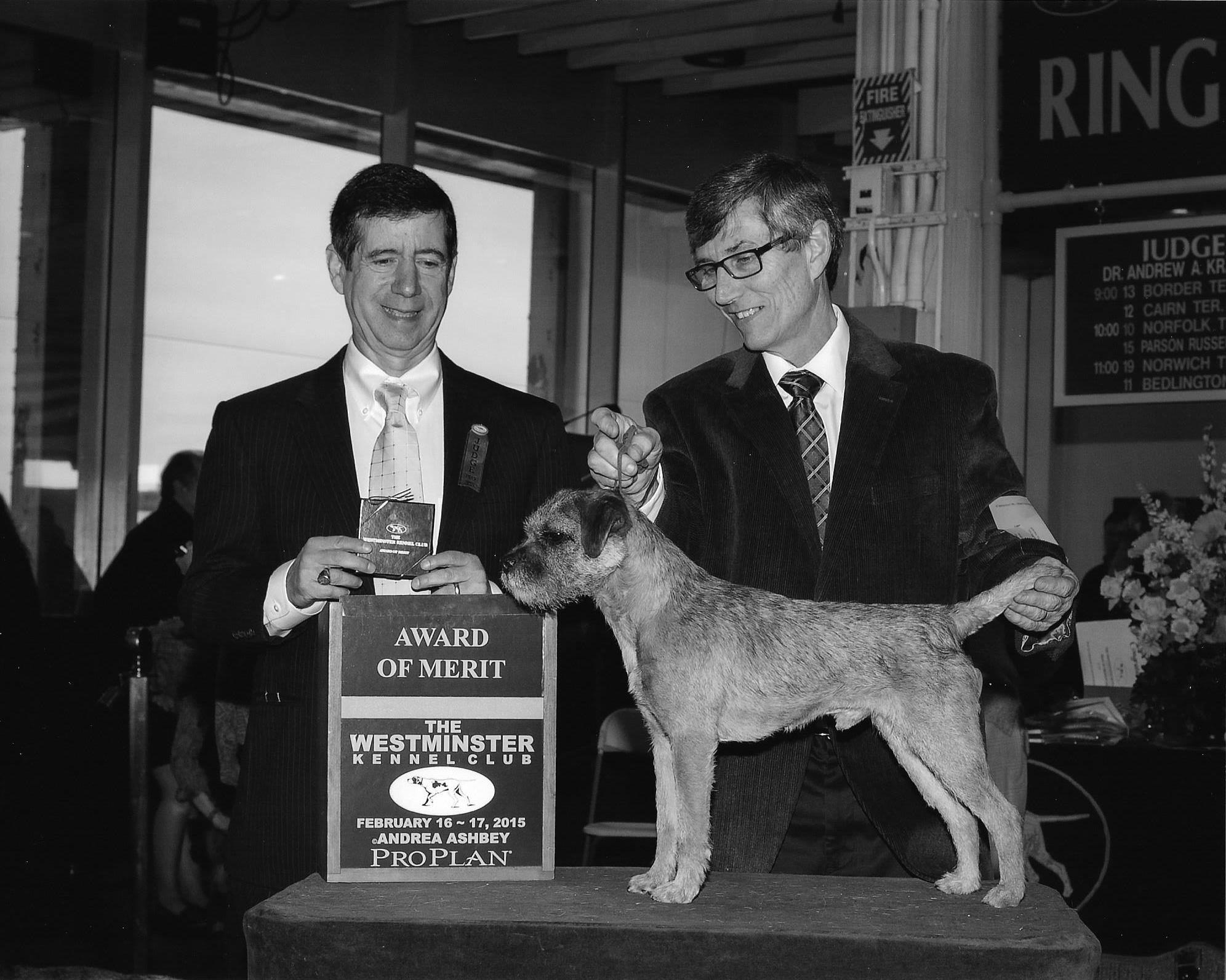AKC Professional Dog Show Handling | Stradbrook Kennels